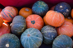 Kalebasser på en bondemarknad Royaltyfri Foto
