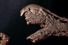 Kaledonischer Gecko mit Haube auf einer Niederlassung stockbild