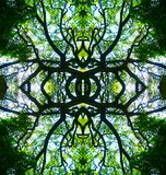 Kaleidescope树设计 库存图片