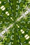 kaleidoscope стоковые изображения rf