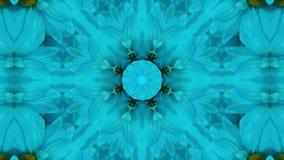 Kaleidoscope blue daisy stock video footage