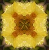 Kaleidoscope Cactus flower Stock Photos