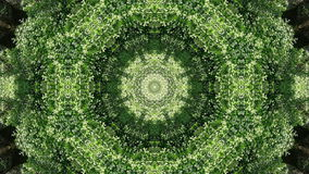 Kaleidoscope, Forest. Abstract kaleidoscope, loop able, full HD stock video footage