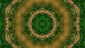 Kaleidoscope, green tree stock video footage