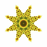 Kaleidoscope with natural motives of sunflowers. In Spain in summertime Stock Photos