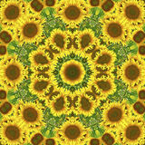 Kaleidoscope with natural motives of sunflowers. In Spain in summertime Royalty Free Stock Images