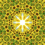Kaleidoscope with natural motives of sunflowers. In Spain in summertime Stock Images
