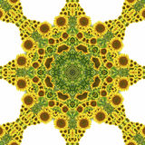 Kaleidoscope with natural motives of sunflowers. In Spain in summertime Royalty Free Stock Photography