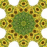 Kaleidoscope with natural motives of sunflowers. In Spain in summertime Stock Image
