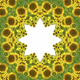 Kaleidoscope with natural motives of sunflowers. In Spain in summertime Royalty Free Stock Photo