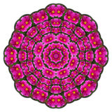 Kaleidoscope purple flowers Stock Images