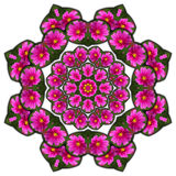 Kaleidoscope purple flowers Royalty Free Stock Photos