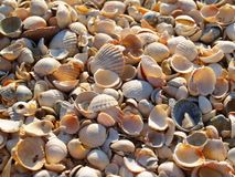 Kaleidoscope of seashells. Macro seashells on the beach Stock Photo