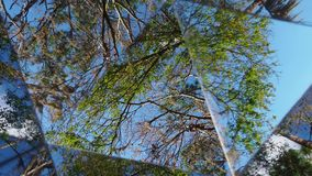 KALEIDOSCOPE OF TREES CLOUDS. VIDEO OF A KALEIDOSCOPE OF TREES CLOUDS stock video