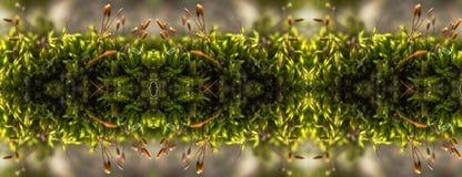 Kaleidoscopic στενή επάνω άποψη του πράσινου βρύου Στοκ Φωτογραφίες
