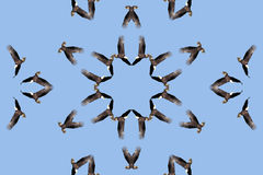 Kaleidoscopic Bald Eagle Stock Photography