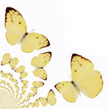 Kaleidoscopic Butterflies Illustration Royalty Free Stock Image