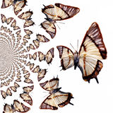 Kaleidoscopic Butterflies Illustration Royalty Free Stock Photo