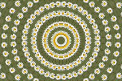 Kaleidoscopic Daisy Flower Stock Images