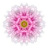 Kaleidoscopic Flower Mandala  Isolated on White Royalty Free Stock Images