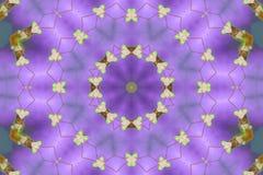 kaleidoscopic mantis моля стоковые фотографии rf
