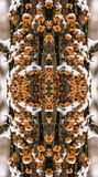 Kaleidoscopic pattern from snowed tree mushrooms in winter Stock Photo