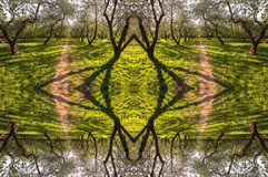 Kaleidoscopic pattern from spring alley of branched trees and sunny green grass Stock Photos