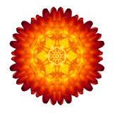 Kaleidoscopic Strawflower Mandala Isolated on White Stock Image