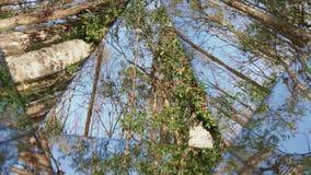 Kaleidoskop, das von links nach rechts verlaufende Grad verschiebt stock video footage