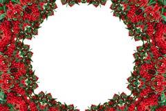 Kaleidoskop von roten Beeren Muster, Mandala Feld Stockbild