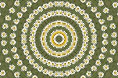Kaleidoskopische Gänseblümchen-Blume Stockbilder