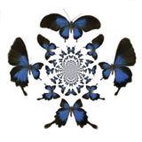 Kalejdoskopowi motyle Ilustracyjni Fotografia Royalty Free