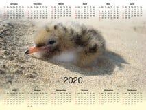 Kalendarz dla 2020 ilustracja wektor