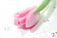 kalendarzowy kwiat Obrazy Royalty Free