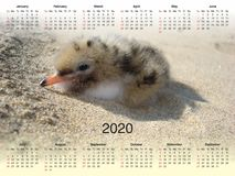Kalender för 2020 vektor illustrationer