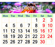 Kalender für September 2017 mit Biene auf der rosa Aster Stockfotografie