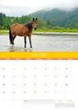 Kalender 2014. Häst. Juli Arkivbild