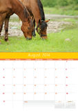 Kalender 2014. Paard. Augustus Royalty-vrije Stock Foto
