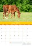 Kalender 2014. Paard. Juni Royalty-vrije Stock Afbeelding
