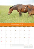 Kalender 2014. Paard. September Stock Fotografie