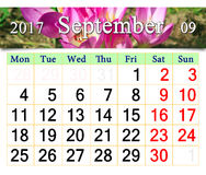 Kalender voor Mei 2017 met bloeiende knoppen van colchicum autumnale Stock Foto