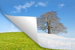 Kalenderbaumwinter gegen Sommer Lizenzfreies Stockbild