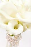 Kalia kwiaty Zdjęcie Royalty Free
