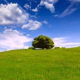 Kalifornia łąkowi wzgórza z dębowym drzewem fotografia royalty free
