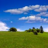 Kalifornia łąkowi wzgórza z dębowym drzewem obraz stock