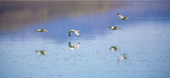 Kalifornia frajer lata nad Mono jeziorem Fotografia Stock