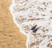 Kalifornia frajera odprowadzenie przy plażą Fotografia Royalty Free