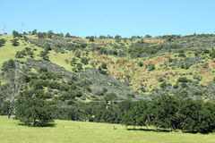 Kalifornia krajobraz Fotografia Stock