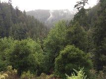 Kalifornia mgiełka Fotografia Stock