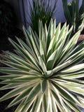 Kalifornia palmy Obrazy Royalty Free
